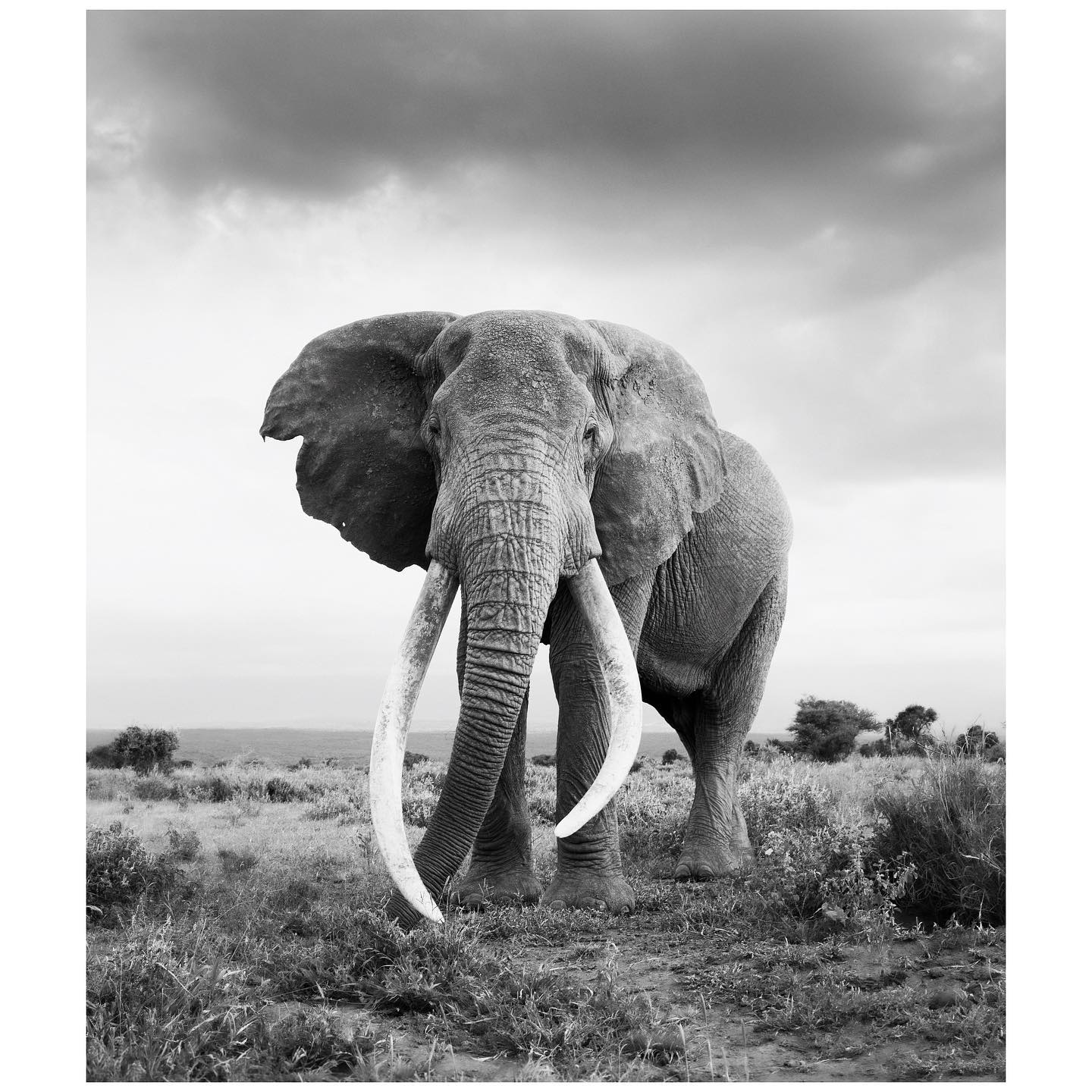 🎉 Prints for Wildlife is coming back for a 2nd Edition! 🎉 They are partnering up with @africanparksnetwork again so don't miss out this time - especially you female photographers. How can you get involved? 📷 If you are a (wildlife) photographer, @printsforwildlife are hosting an open call until the 9th of May. They are especially looking for local talent from across Africa, POC, female identifying photographers and emerging talent, as they want their fundraiser to showcase diverse, new and emerging talent from around the world. Please send in a preview of your best wildlife related work via mail to hello@printsforwildlife.org for a chance to be a part of this! Volunteers: They are also looking for volunteers to help them pack and ship prints in their print lab in Amsterdam in the summer months (July & August 2021). Please also reach out via e-mail to hello@printsforwildlife.org if you'd be interested in joining them! Make sure to sign-up for their newsletter on www.printsforwildlife.org to be among the first to be notified when the fundraiser opens.